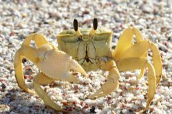 ghost crab canon 20d by Justin Bauer