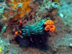 Taken at Bali, Indonesia by Dennis Siau