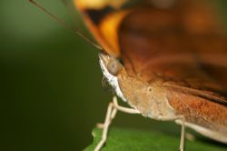 Butterfly taken in mangroves with canon 20D after dive wh... by Justin Bauer