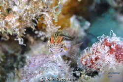 This little guy was definitely not camera shy, I think it... by John Pappas