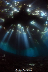 Holly lights underwater by Alp Baranok
