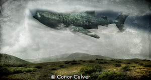 """Cloud Filter"" Whale Sharks filter through 1500 gallons o... by Conor Culver"
