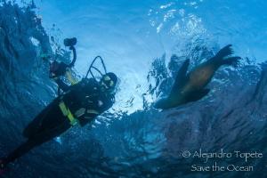 Vanesa and Sea Lion, Los Islotes de la Paz Mexico by Alejandro Topete