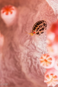 Lady bug in pink. by Mehmet Salih Bilal