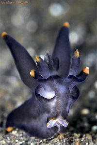 Batman2 nudibranch by Iyad Suleyman