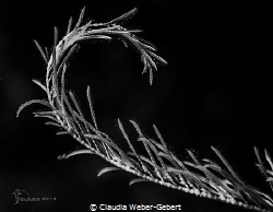 curves........
