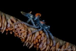Xenon Crab by Henrik Gram Rasmussen