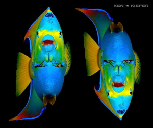 Angel Demon.   Same queen angelfish picture, just the one... by Ken Kiefer