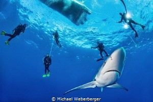 one of the best blue shark dives in the Azores- http://di... by Michael Weberberger