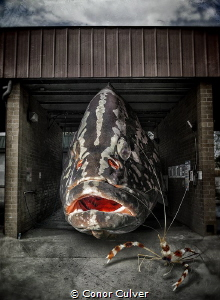 """""""Cleaning Station"""" the relationship between shrimp, group... by Conor Culver"""