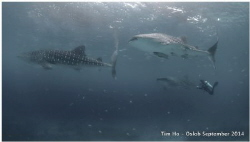 Whaleshark Soup (Compact Camera S95) by Tim Ho