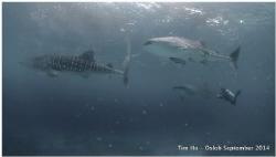 Whaleshark Soup (Compact Camera S95) by Tim Ho