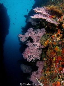 Absence. Sea Fan - Melithaea sp. Koh Tao, Thailand-EM5-Pa... by Stefan Follows