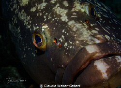 look into my eyes....... big grouper coming near by Claudia Weber-Gebert