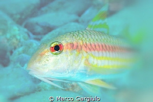 Mullet eye by Marco Gargiulo