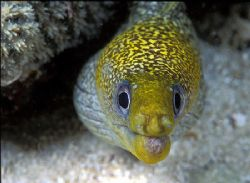 Great barrier reef, Australia by Raul Rodriguez