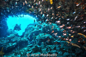 Diver and copper sweepers, Toucari Cave, Cabrits National... by Arun Madisetti