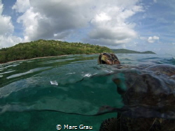 Green turtle breathe in Mayotte by Marc Grau