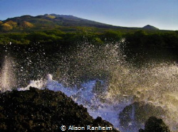 """Hawaiian Punch!"" by Alison Ranheim"