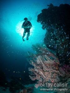 Boom Boom Dan along the reef :) by Oktay Calisir