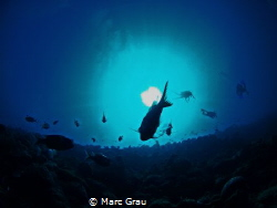 Three strange animals above by Marc Grau
