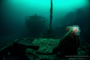 Parat and Ferndale wreck from WW2 sunk at the same day, i... by Rene B. Andersen