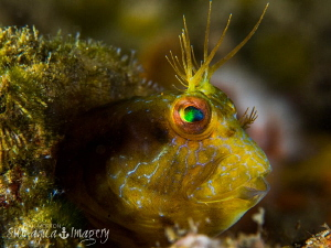 Life in the Bottle