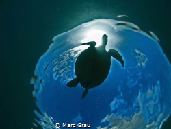 Turtle, Snell and sky by Marc Grau