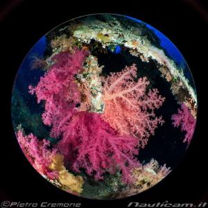Circle of softies by Pietro Cremone