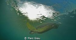 Green turtle under de sun by Marc Grau