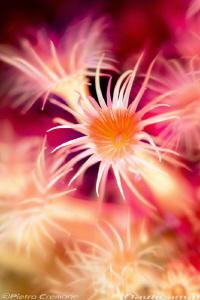 Dream sea flower (No PS) by Pietro Cremone