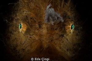 hairy eyes by Eda Çıngı