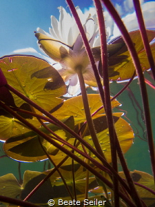 Under the sea (lake) by Beate Seiler