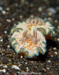"""little Nudi"" Bali- Tulamben Coral Garden Sony NEX-7, S... by Dennis Kasa"