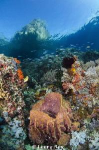 Raja Ampat reefscape by Leena Roy