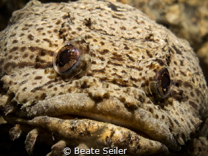Toadfish by Beate Seiler
