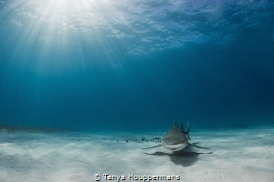 Lemon Rays