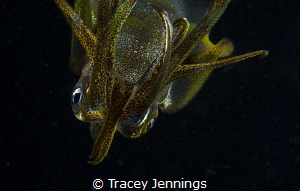 Too close ... curious squid investigates my camera by Tracey Jennings