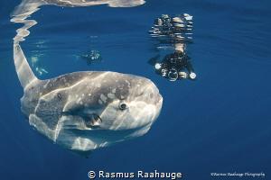 Image shot close to Catalina Island by Rasmus Raahauge
