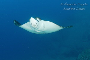 Eagle Ray close up by Alejandro Topete