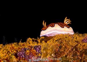 Nudibranch catwalk by Sean Chinn