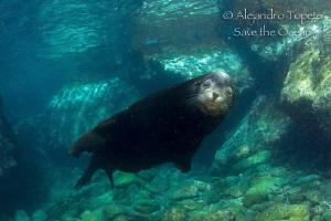 Male Sea Lion in the yard, La Paz Mexico by Alejandro Topete