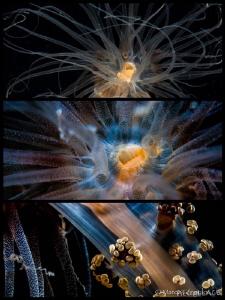 Collage #3  Alicia mirabilis by Marco Gargiulo