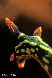 """Details of a Beauty"" - Nembrotha Kubaryana Nudibranch