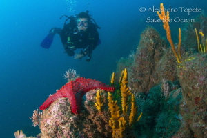 Diver with Star, Acapulco Mexico by Alejandro Topete