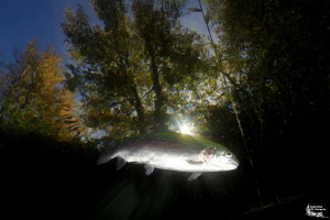 Trout and sunrays :-D by Daniel Strub