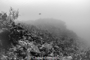 """""""Solo Turtle"""" A good sized Hawksbill claims his spot alo... by Chase Darnell"""