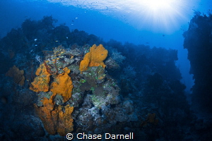 """""""Choose Your Path"""" A coralscape taken on a dive site aro... by Chase Darnell"""