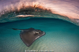 """Stingray Sunrise"" by Susannah H. Snowden-Smith"