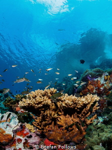 Simply Sail Rock :)Sail Rock, Thailand-EM5-Panasonic 8mm-... by Stefan Follows